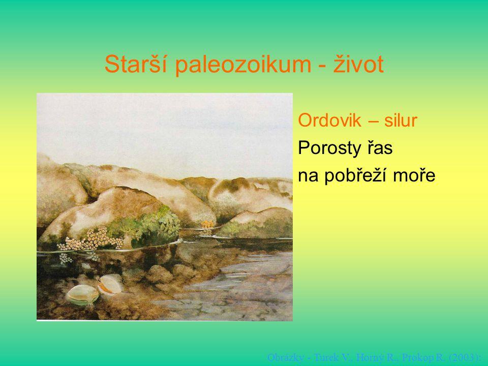 Starší paleozoikum - život Ordovik – silur Porosty řas na pobřeží moře Obrázky - Turek V., Horný R., Prokop R. (2003):