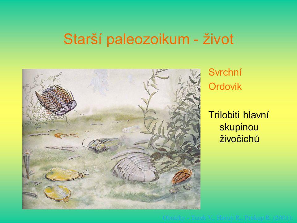 Starší paleozoikum - život Svrchní Ordovik Trilobiti hlavní skupinou živočichů Obrázky - Turek V., Horný R., Prokop R. (2003):