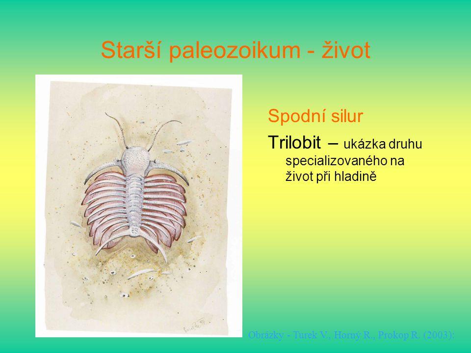 Starší paleozoikum - život Spodní silur Trilobit – ukázka druhu specializovaného na život při hladině Obrázky - Turek V., Horný R., Prokop R. (2003):