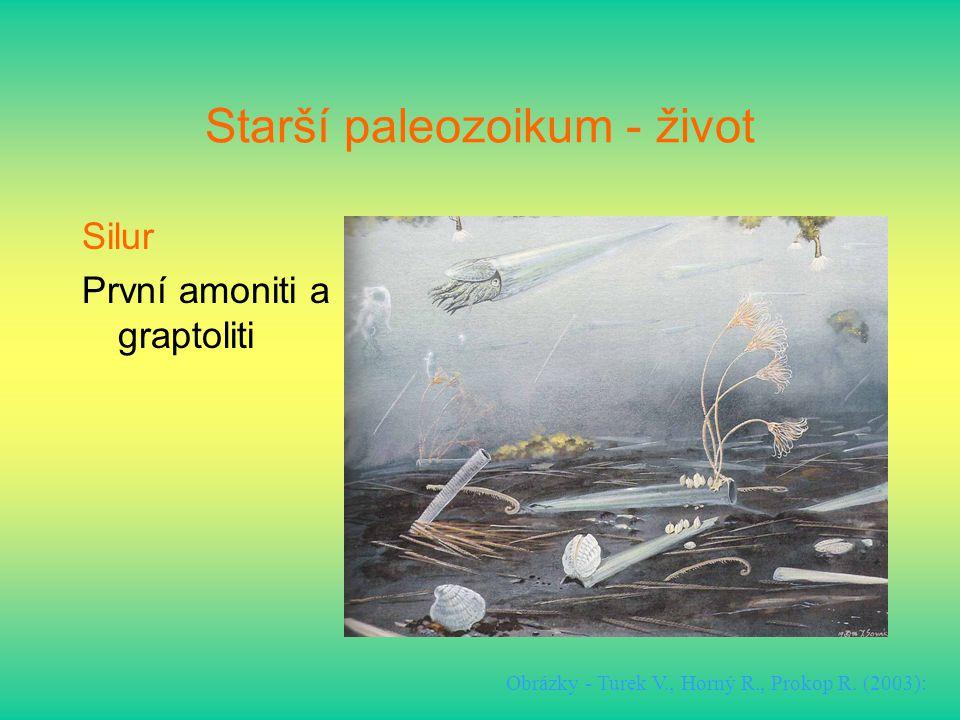 Starší paleozoikum - život Silur První amoniti a graptoliti Obrázky - Turek V., Horný R., Prokop R. (2003):