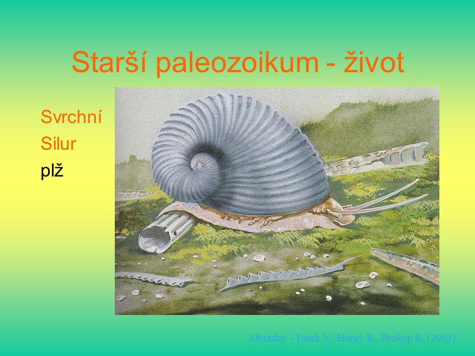 Starší paleozoikum - život Svrchní Silur plž Obrázky - Turek V., Horný R., Prokop R. (2003):