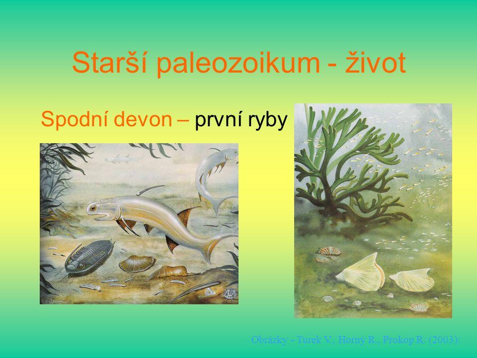Starší paleozoikum - život Spodní devon – první ryby Obrázky - Turek V., Horný R., Prokop R. (2003):