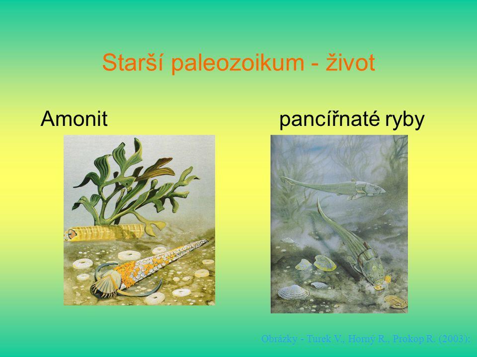 Starší paleozoikum - život Amonitpancířnaté ryby Obrázky - Turek V., Horný R., Prokop R. (2003):