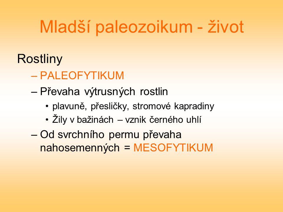 Mladší paleozoikum - život Rostliny –PALEOFYTIKUM –Převaha výtrusných rostlin plavuně, přesličky, stromové kapradiny Žily v bažinách – vznik černého u