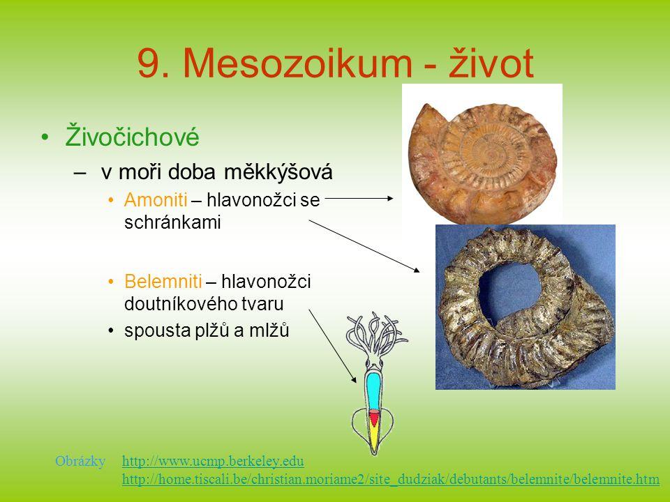 9. Mesozoikum - život Živočichové – v moři doba měkkýšová Amoniti – hlavonožci se schránkami Belemniti – hlavonožci doutníkového tvaru spousta plžů a