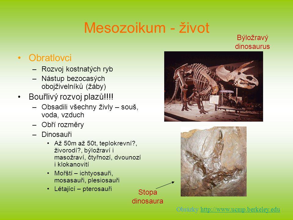 Mesozoikum - život Obratlovci –Rozvoj kostnatých ryb –Nástup bezocasých obojživelníků (žáby) Bouřlivý rozvoj plazů!!!! –Obsadili všechny živly – souš,