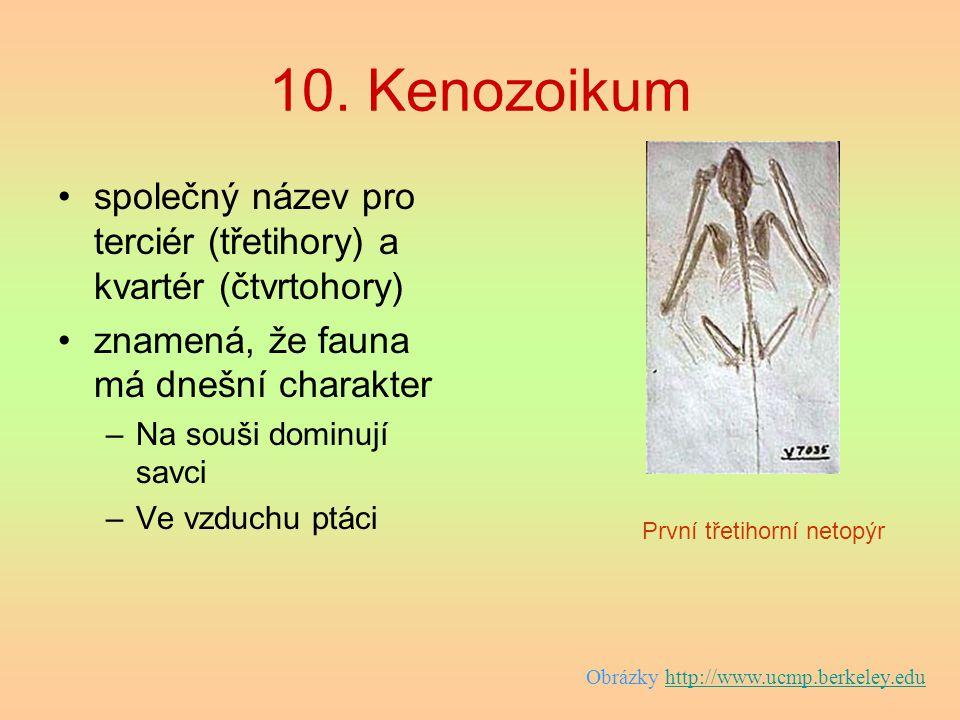 10. Kenozoikum společný název pro terciér (třetihory) a kvartér (čtvrtohory) znamená, že fauna má dnešní charakter –Na souši dominují savci –Ve vzduch