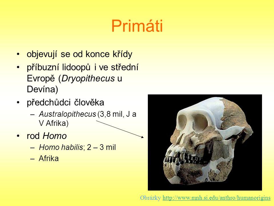 Primáti objevují se od konce křídy příbuzní lidoopů i ve střední Evropě (Dryopithecus u Devína) předchůdci člověka –Australopithecus (3,8 mil, J a V A