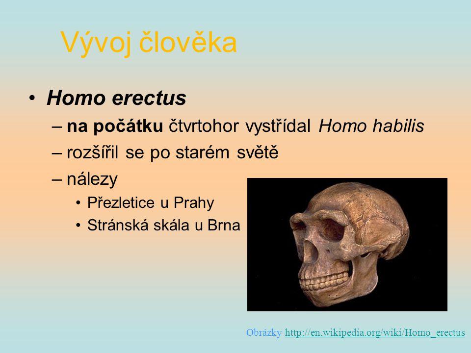 Vývoj člověka Homo erectus –na počátku čtvrtohor vystřídal Homo habilis –rozšířil se po starém světě –nálezy Přezletice u Prahy Stránská skála u Brna