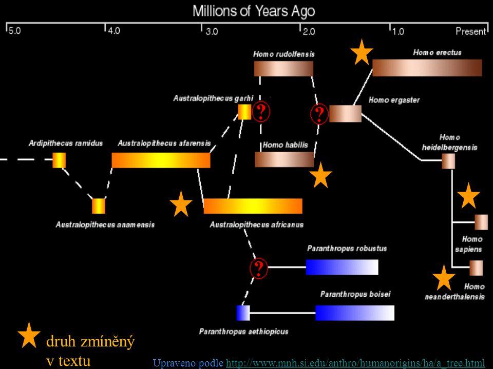 druh zmíněný v textu Upraveno podle http://www.mnh.si.edu/anthro/humanorigins/ha/a_tree.htmlhttp://www.mnh.si.edu/anthro/humanorigins/ha/a_tree.html