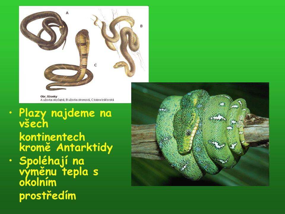 Šupinatí Šupinatí jsou největší skupinou plazů Mají silnou kůži pokrytou rohovými šupinami Tradičně jsou děleni na tři podřády - ještěry, hady a dvouplazy