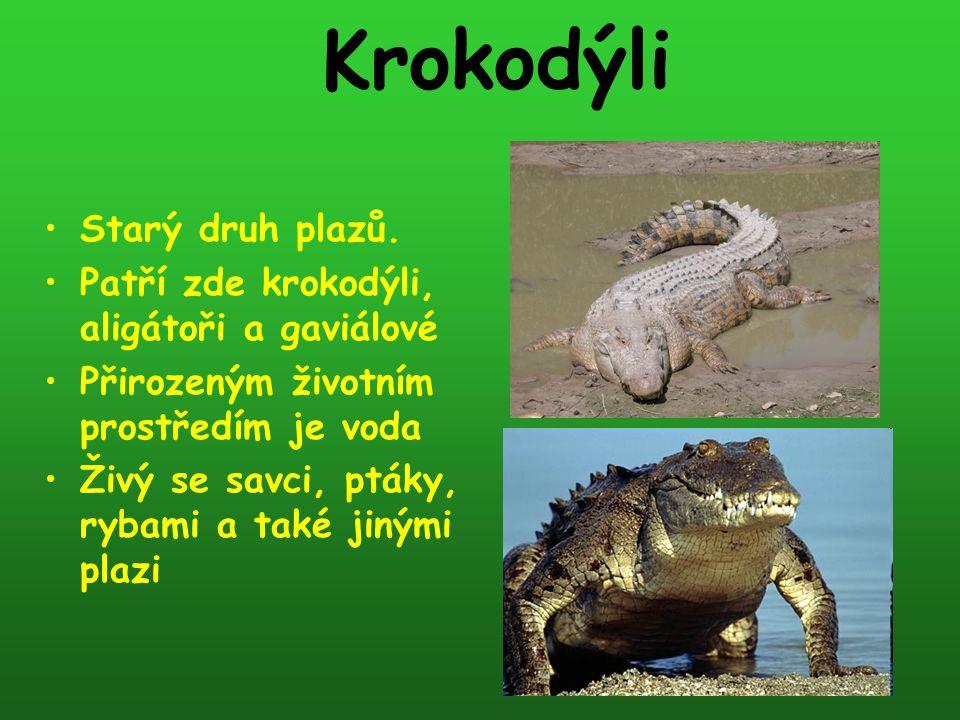 Krokodýli Starý druh plazů. Patří zde krokodýli, aligátoři a gaviálové Přirozeným životním prostředím je voda Živý se savci, ptáky, rybami a také jiný