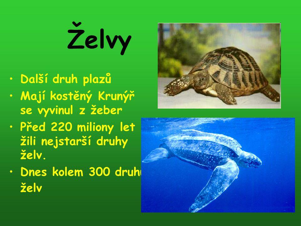 Želvy Další druh plazů Mají kostěný Krunýř se vyvinul z žeber Před 220 miliony let žili nejstarší druhy želv. Dnes kolem 300 druhů želv