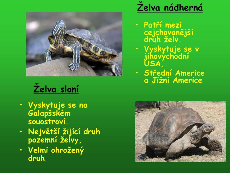 Patří mezi cejchovanější druh želv. Vyskytuje se v jihovýchodní USA, Střední Americe a Jižní Americe Želva nádherná Vyskytuje se na Galapšském souostr