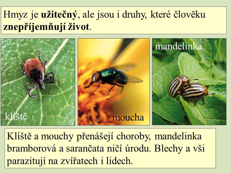 Hmyz je užitečný, ale jsou i druhy, které člověku znepříjemňují život. Klíště a mouchy přenášejí choroby, mandelinka bramborová a sarančata ničí úrodu