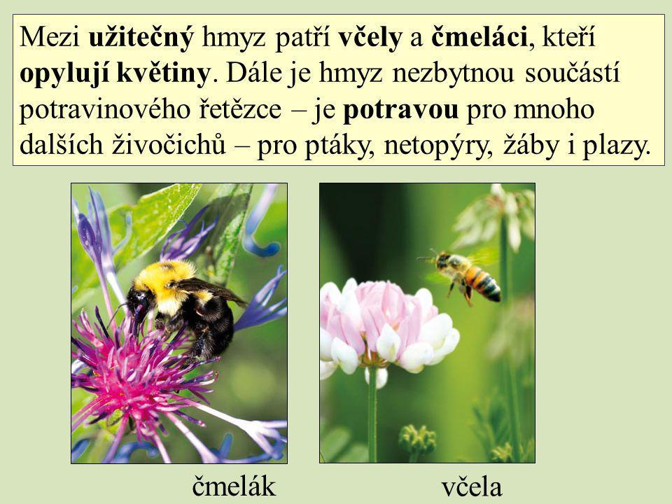 Mezi užitečný hmyz patří včely a čmeláci, kteří opylují květiny. Dále je hmyz nezbytnou součástí potravinového řetězce – je potravou pro mnoho dalších