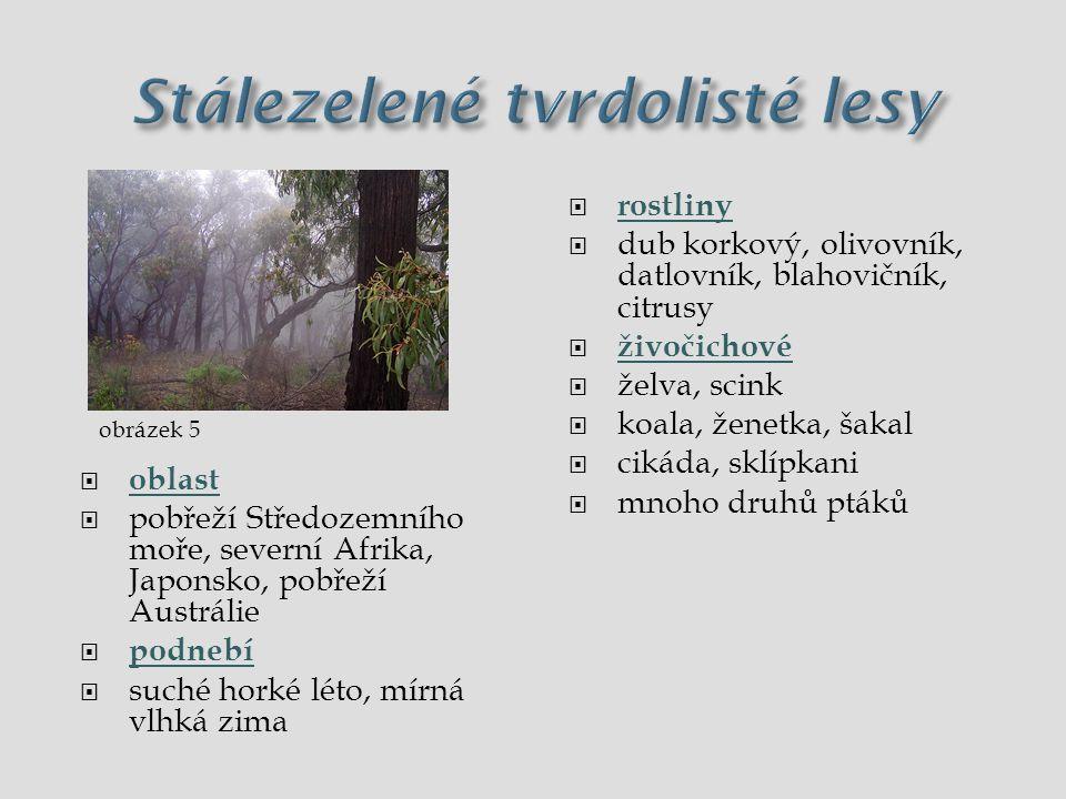  oblast  pobřeží Středozemního moře, severní Afrika, Japonsko, pobřeží Austrálie  podnebí  suché horké léto, mírná vlhká zima  rostliny  dub kor