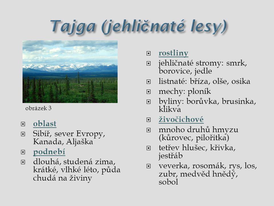 Tajga  oblast  Sibiř, sever Evropy, Kanada, Aljaška  podnebí  dlouhá, studená zima, krátké, vlhké léto, málo živin v půdě  rostliny  jehličnaté stromy: smrk, borovice, jedle, listnaté: bříza, olše, osika  mechy: ploník  byliny: borůvka, brusinka, klikva  živočichové  mnoho druhů hmyzu (kůrovec, pilořitka)  tetřev hlušec, křivka, jestřáb  veverka, rosomák, rys, los, zubr, medvěd hnědý, sobol