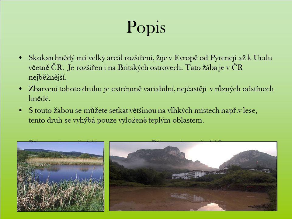 Popis Skokan hn ě dý má velký areál rozší ř ení, ž ije v Evrop ě od Pyrenejí a ž k Uralu v č etn ě Č R.