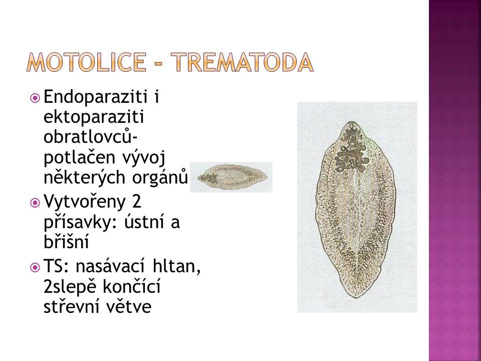  Endoparaziti i ektoparaziti obratlovců- potlačen vývoj některých orgánů  Vytvořeny 2 přísavky: ústní a břišní  TS: nasávací hltan, 2slepě končící střevní větve