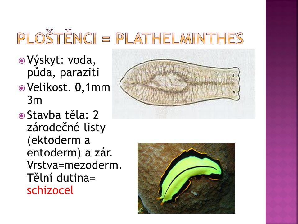  Výskyt: voda, půda, paraziti  Velikost. 0,1mm – 3m  Stavba těla: 2 zárodečné listy (ektoderm a entoderm) a zár. Vrstva=mezoderm. Tělní dutina= sch