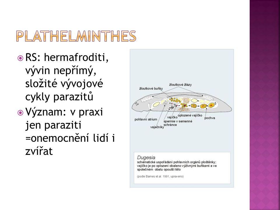  RS: hermafroditi, vývin nepřímý, složité vývojové cykly parazitů  Význam: v praxi jen paraziti =onemocnění lidí i zvířat