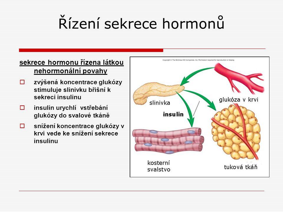 Řízení sekrece hormonů sekrece hormonu řízena látkou nehormonální povahy  zvýšená koncentrace glukózy stimuluje slinivku břišní k sekreci insulinu  insulin urychlí vstřebání glukózy do svalové tkáně  snížení koncentrace glukózy v krvi vede ke snížení sekrece insulinu