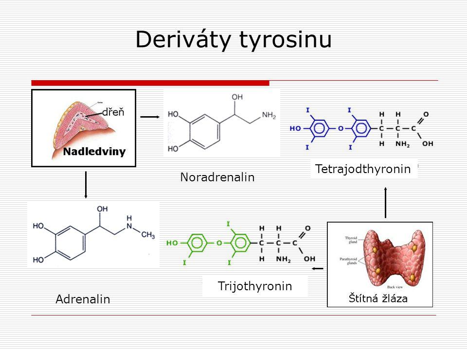 Deriváty tyrosinu Adrenalin Noradrenalin Tetrajodthyronin Trijothyronin