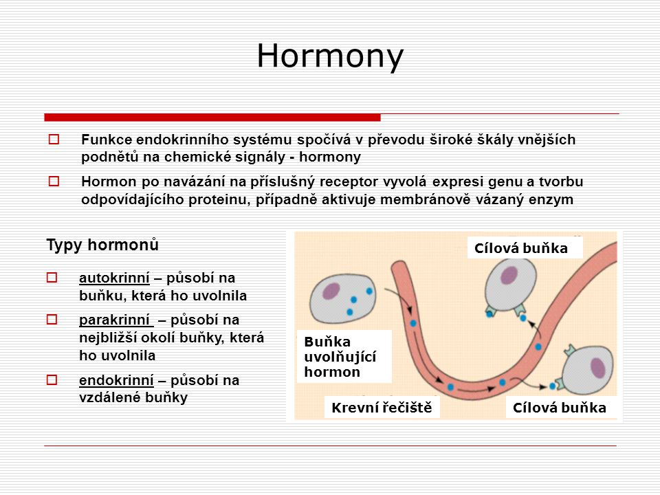 Řízení sekrece hormonů sekrece daného hormonu ovlivněna jiným hormonem