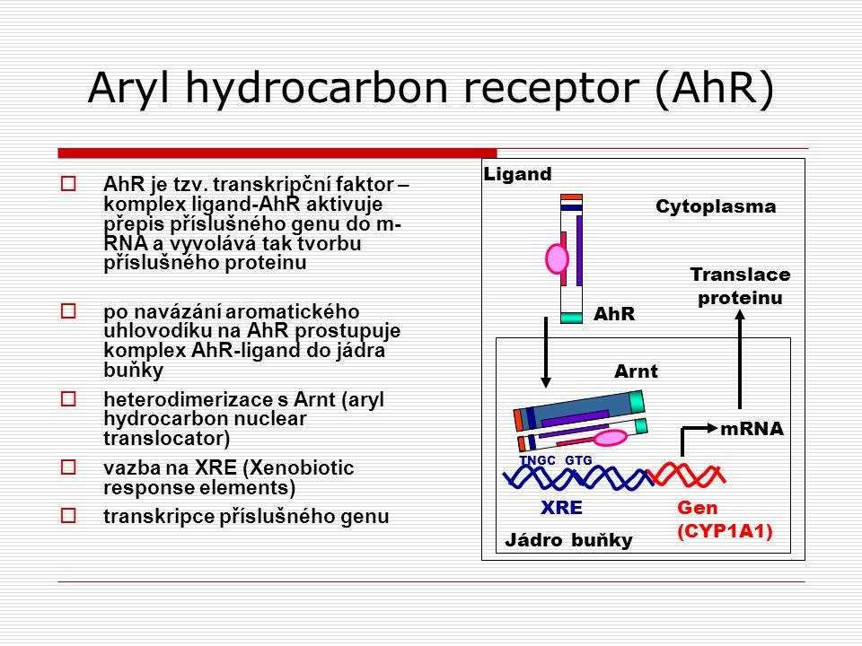 Aryl hydrocarbon receptor (AhR)  AhR je tzv.