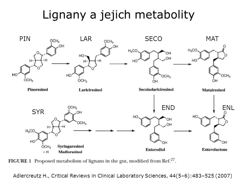 Lignany a jejich metabolity Adlercreutz H., Critical Reviews in Clinical Laboratory Sciences, 44(5–6):483–525 (2007) SECOMATPINLAR SYR ENDENL