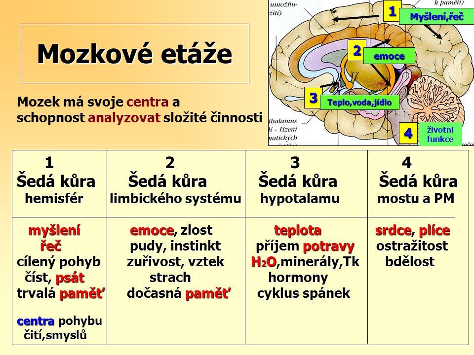 1 2 3 4 1 2 3 4 Šedá kůra Šedá kůra Šedá kůra Šedá kůra hemisfér limbického systému hypotalamu mostu a PM hemisfér limbického systému hypotalamu mostu