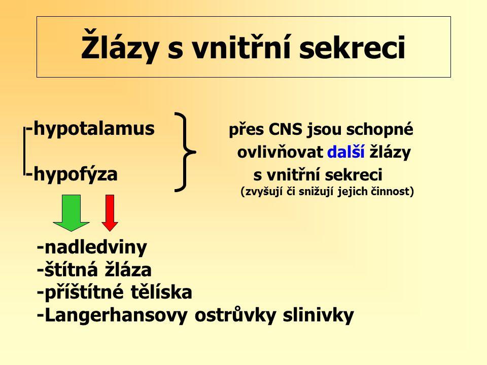 Žlázy s vnitřní sekreci -hypotalamus přes CNS jsou schopné ovlivňovat další žlázy -hypofýza s vnitřní sekreci (zvyšují či snižují jejich činnost) -nadledviny -štítná žláza -příštítné tělíska -Langerhansovy ostrůvky slinivky