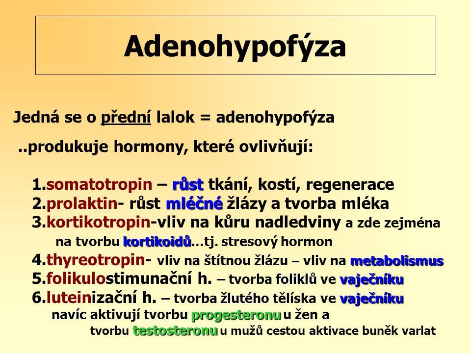 Adenohypofýza Jedná se o přední lalok = adenohypofýza..produkuje hormony, které ovlivňují: růst 1.somatotropin – růst tkání, kostí, regenerace mléčné 2.prolaktin- růst mléčné žlázy a tvorba mléka 3.kortikotropin-vliv na kůru nadledviny a zde zejména kortikoidů na tvorbu kortikoidů…tj.