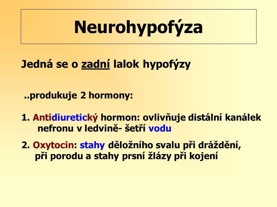 Neurohypofýza Jedná se o zadní lalok hypofýzy..produkuje 2 hormony: 1. Antidiuretický hormon: ovlivňuje distální kanálek nefronu v ledvině- šetří vodu