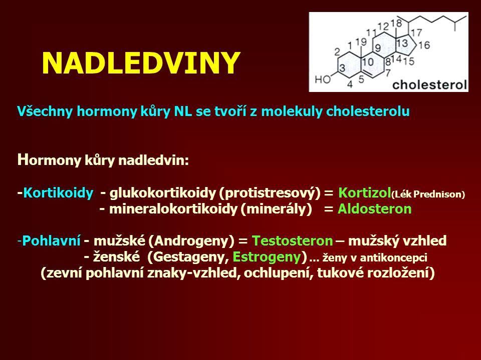NADLEDVINY Všechny hormony kůry NL se tvoří z molekuly cholesterolu H ormony kůry nadledvin: -Kortikoidy - glukokortikoidy (protistresový) = Kortizol ( Lék Prednison ) - mineralokortikoidy (minerály) = Aldosteron -Pohlavní - mužské (Androgeny) = Testosteron – mužský vzhled - ženské (Gestageny, Estrogeny) … ženy v antikoncepci (zevní pohlavní znaky-vzhled, ochlupení, tukové rozložení)