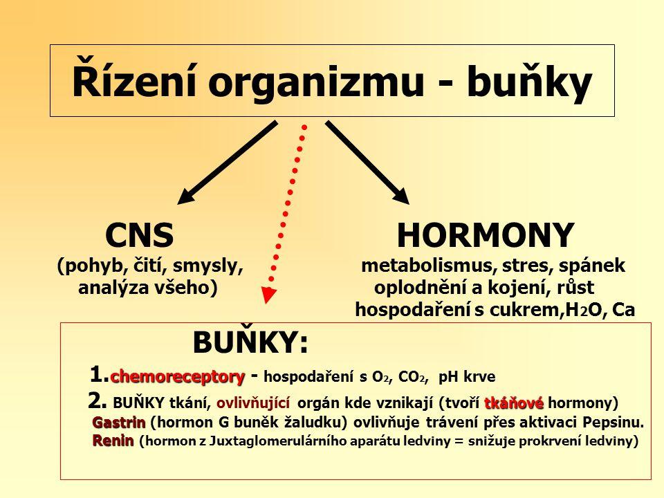 Řízení organizmu - buňky CNS HORMONY (pohyb, čití, smysly, metabolismus, stres, spánek analýza všeho) oplodnění a kojení, růst hospodaření s cukrem,H