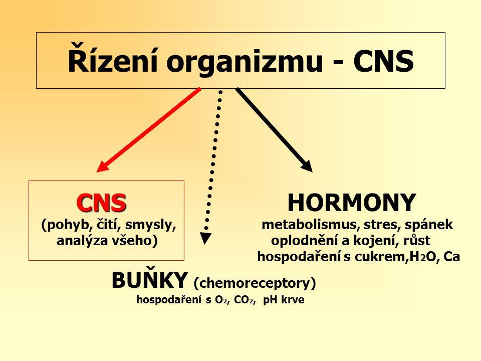 Řízení organizmu - CNS CNS CNS HORMONY (pohyb, čití, smysly, metabolismus, stres, spánek analýza všeho) oplodnění a kojení, růst hospodaření s cukrem,H 2 O, Ca BUŇKY (chemoreceptory) hospodaření s O 2, CO 2, pH krve