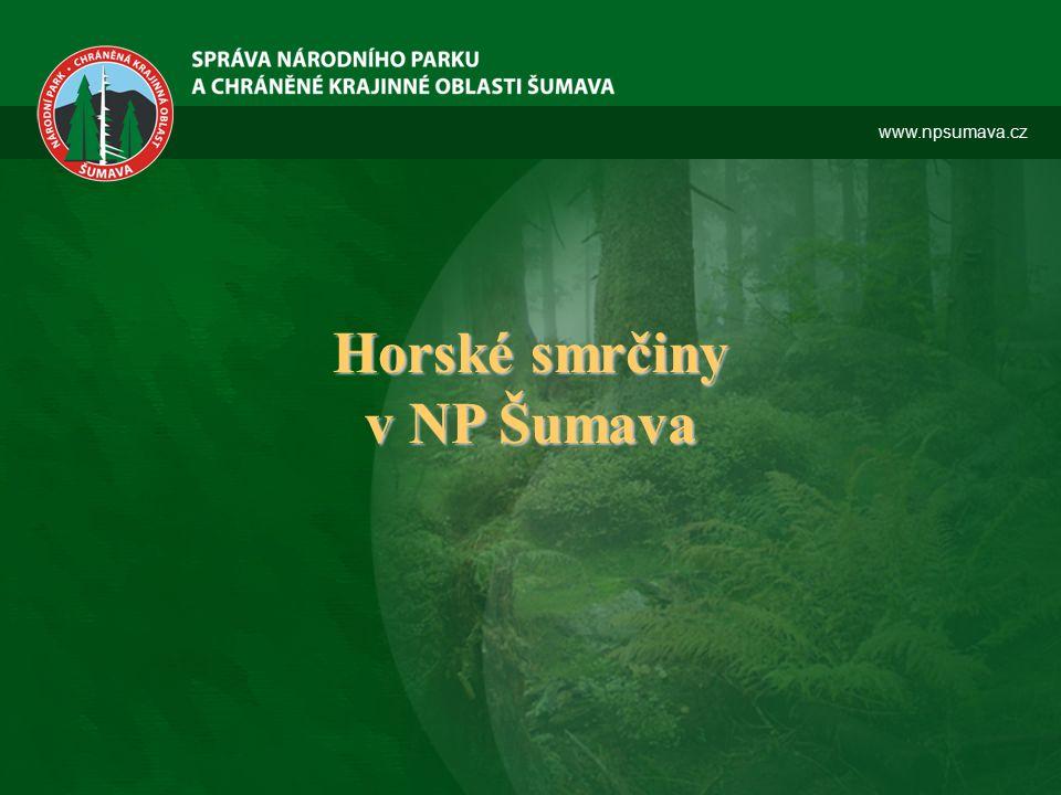 www.npsumava.cz Horské smrčiny v NP Šumava