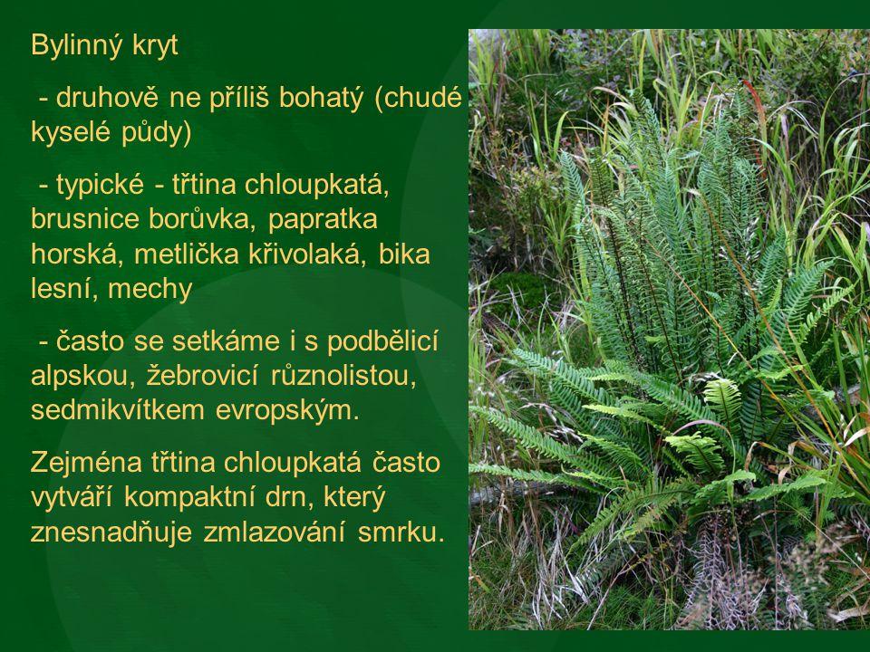 Bylinný kryt - druhově ne příliš bohatý (chudé kyselé půdy) - typické - třtina chloupkatá, brusnice borůvka, papratka horská, metlička křivolaká, bika