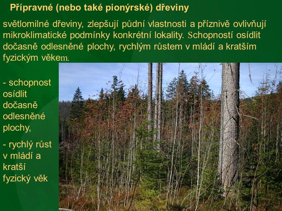 Přípravné (nebo také pionýrské) dřeviny světlomilné dřeviny, zlepšují půdní vlastnosti a příznivě ovlivňují mikroklimatické podmínky konkrétní lokalit