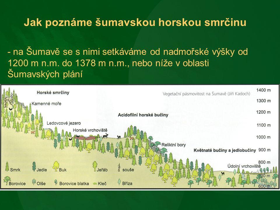 - porosty, kde je dominantní dřevinou smrk ztepilý - vtroušeně jeřáb ptačí, jedle bělokorá, javor klen, buk lesní - limitující faktor – teplo (světlo) - tvoří téměř ¼ rozlohy NPŠ - na Šumavě najdeme nejrozsáhlejší ucelené smrčiny v ČR, Národní park Šumava s 16 827 ha a Národní park Bavorský les s 5 843 ha horských smrčin tvoří největší souvislý areál tohoto typu lesa ve střední Evropě - horské smrčiny jsou pro svou jedinečnost zařazeny do seznamu chráněných ekosystémů v rámci EU – Typ přírodního stanoviště soustavy Natura 2000 – 9410 Acidofilní smrčiny