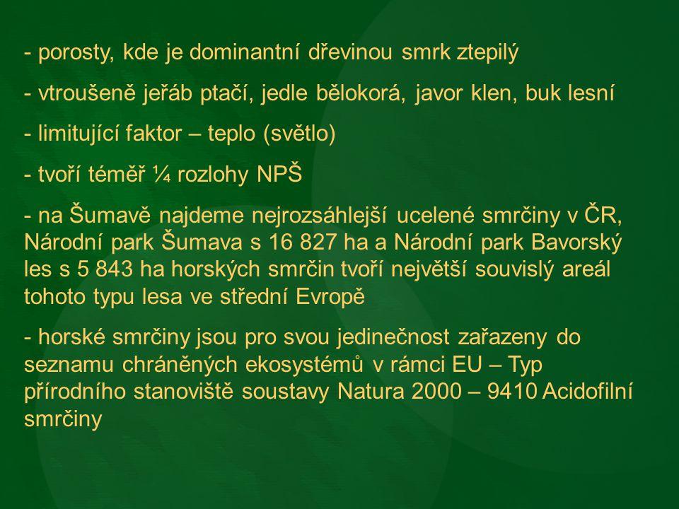 Datlík tříprstý - typický ptačí druh horských smrkových lesů Šumavy.
