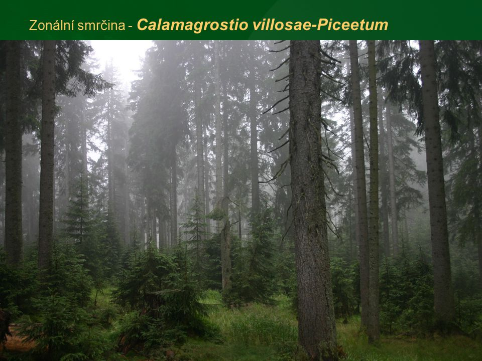 1)Z hlediska střední Evropy je Šumava jedinečná svou rozlohou horských smrčin.
