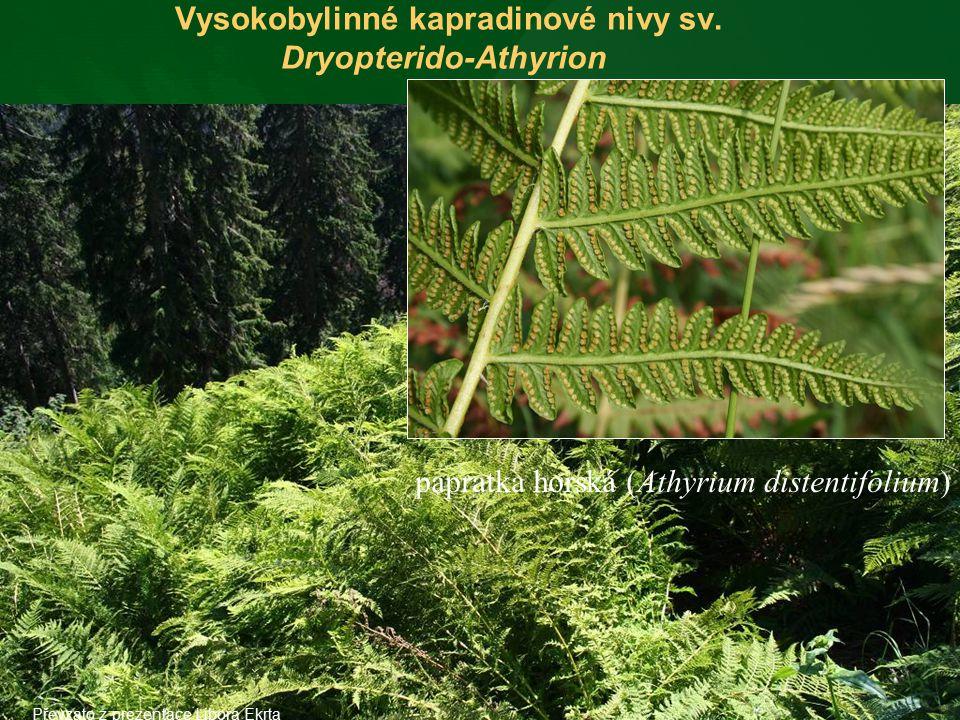 Vysokobylinné kapradinové nivy sv. Dryopterido-Athyrion papratka horská (Athyrium distentifolium) Převzato z prezentace Libora Ekrta