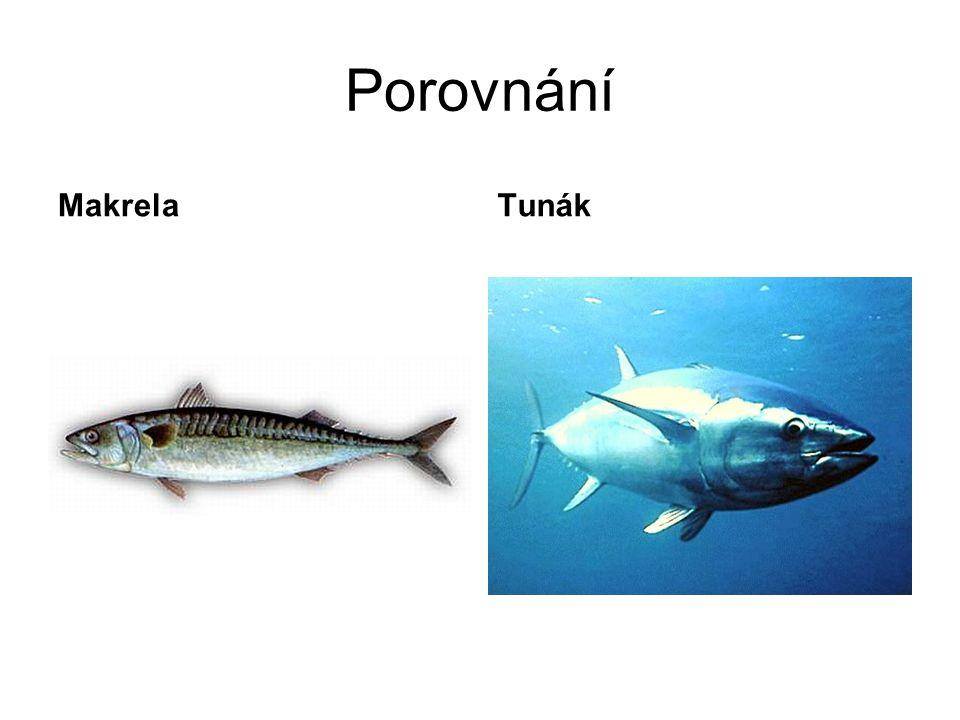 Porovnání MakrelaTunák
