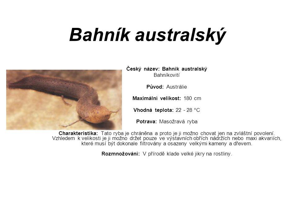 Bahník australský Český název: Bahník australský Bahníkovití Původ: Austrálie Maximální velikost: 180 cm Vhodná teplota: 22 - 28 °C Potrava: Masožravá