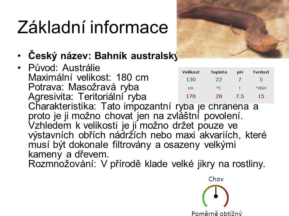 Latimérie podivná je ryba ze skupiny lalokoploutví, dlouhá v průměru 1 metr, se zavalitým tělem, ploutvemi na násadcích a modrými šupinami.