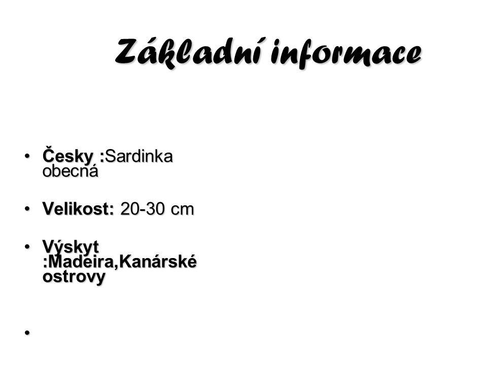 Základní informace Česky :Sardinka obecnáČesky :Sardinka obecná Velikost: 20-30 cmVelikost: 20-30 cm Výskyt :Madeira,Kanárské ostrovyVýskyt :Madeira,K