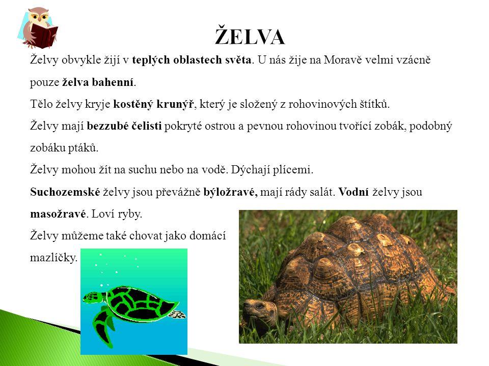Želvy obvykle žijí v teplých oblastech světa. U nás žije na Moravě velmi vzácně pouze želva bahenní. Tělo želvy kryje kostěný krunýř, který je složený